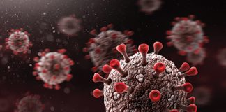 Photo of a microscopic view of the COVID-19 virus